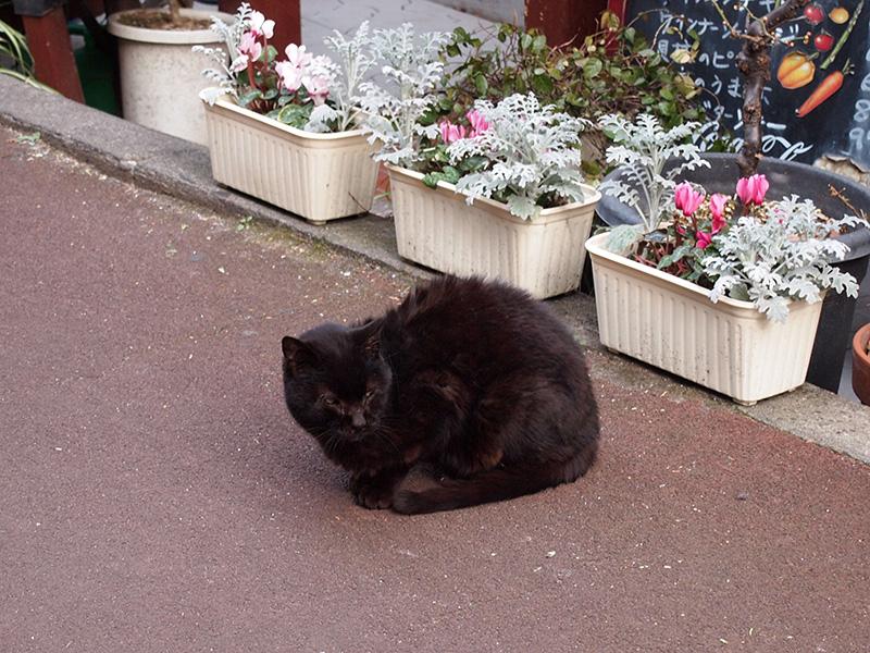 地域猫の黒猫