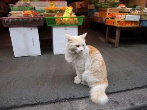 みやぎ屋さんの招き猫 トロちゃん